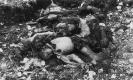 Corpi straziati di soldati austroungarici, Dente del Pasubio 1917